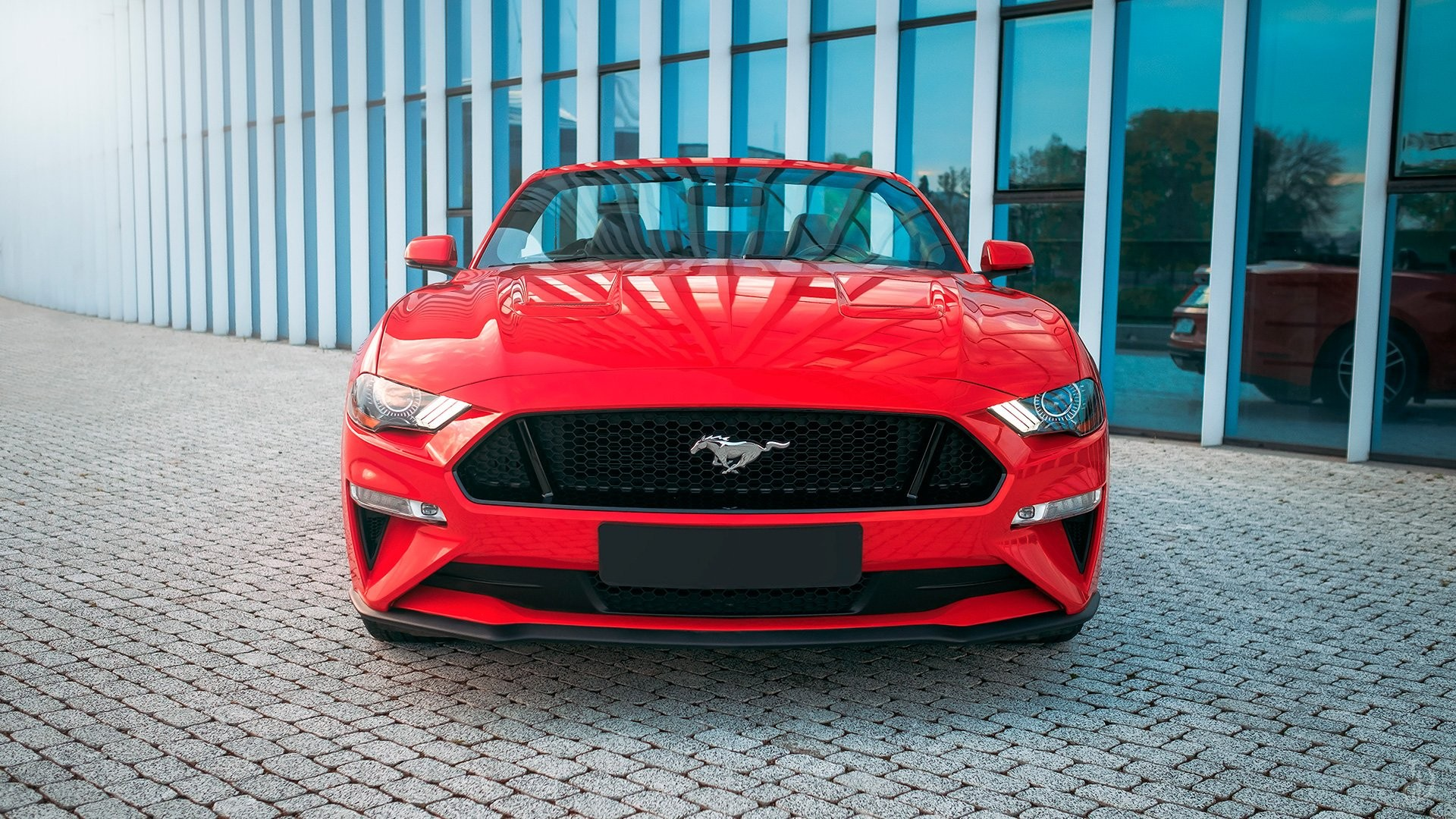 Ford Mustang GT 5.0. Фото 7